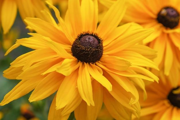 夏の黄色い花のクローズアップ