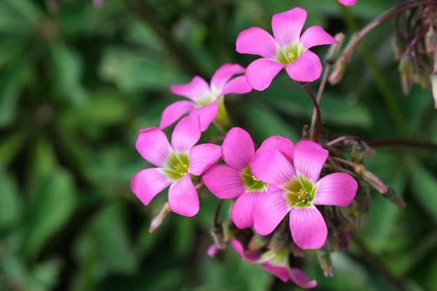 美しい夏のピンクの花