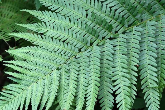 大きな美しい緑の葉のクローズアップ自然植物緑
