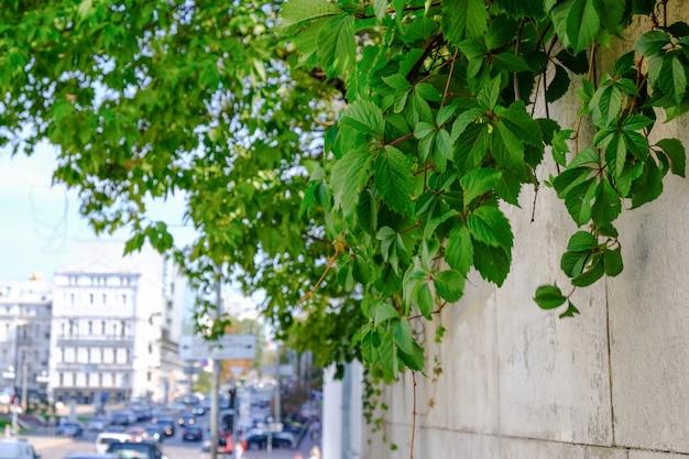 キエフの中心部にある夏の街並み