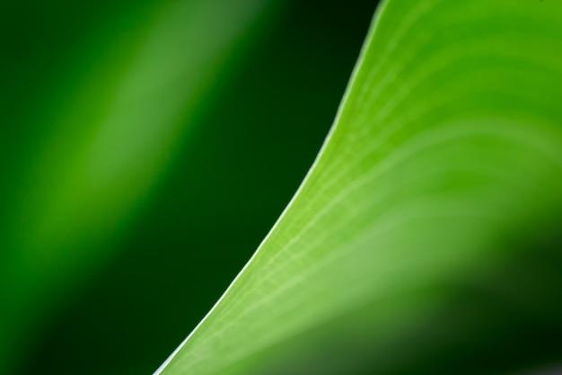 ぼやけている緑の葉観葉植物マクロ。光と影の間の優雅な対角線。