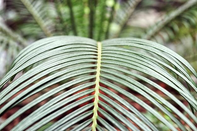 観葉植物のやし。屋内の国内ヤシの若いエレガントな緑の葉。熱帯の植物や木々。