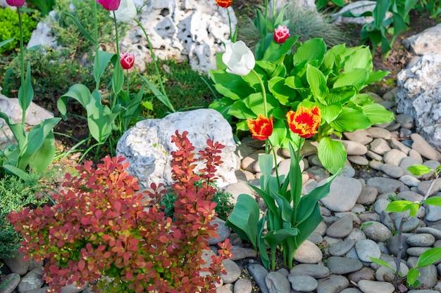 Цветочный ландшафт с тюльпанами