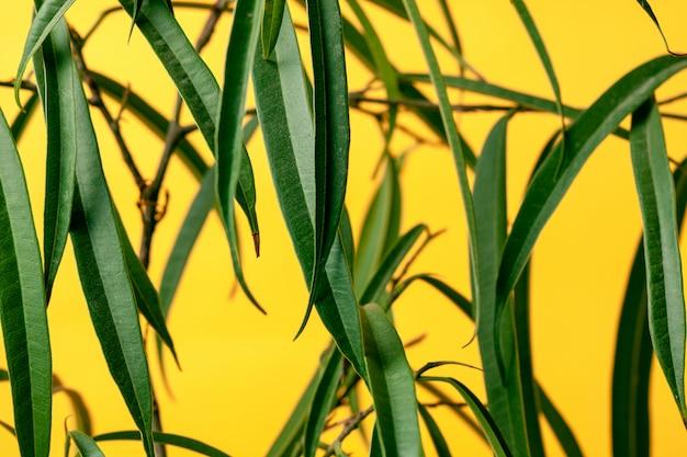 黄色の背景で観葉植物ヤシ。デザイン用テンプレート。スペースをコピーします。