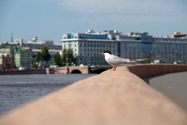 夏の晴れた日に市の堤防の欄干にカモメ