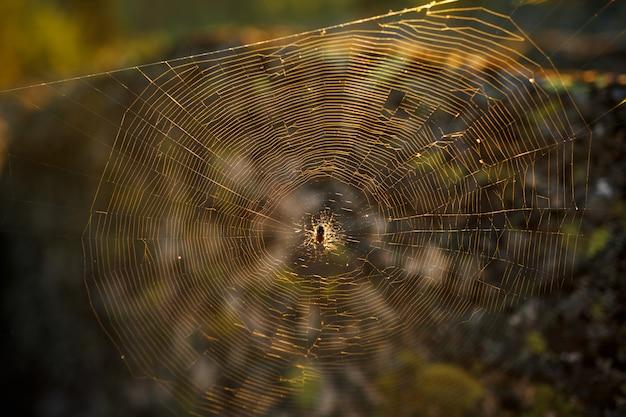 森の中の太陽の下でウェブ上のクモ