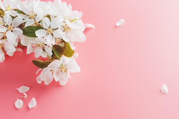 Цветущая сакура, весенние цветы на розовом