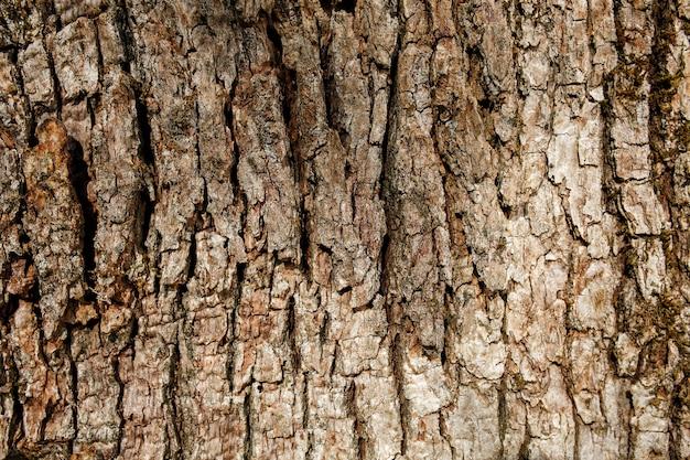 サザンシルキーオークの樹皮