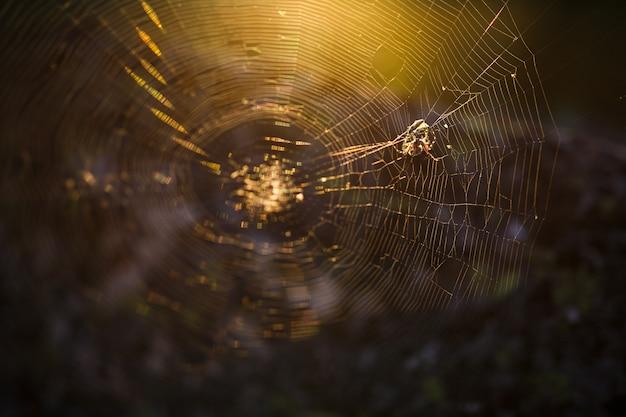 太陽の下で、森の中のウェブ上のクモ