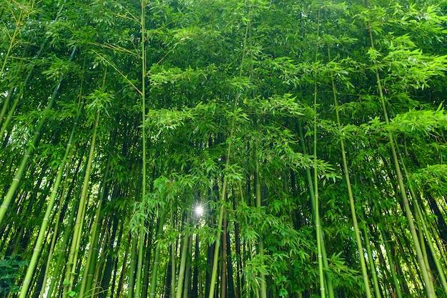 緑の竹の葉の背景素材。竹の森。
