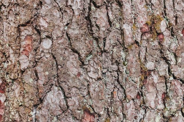 松の木の樹皮のテクスチャー。フルスクリーンのクローズアップ背景