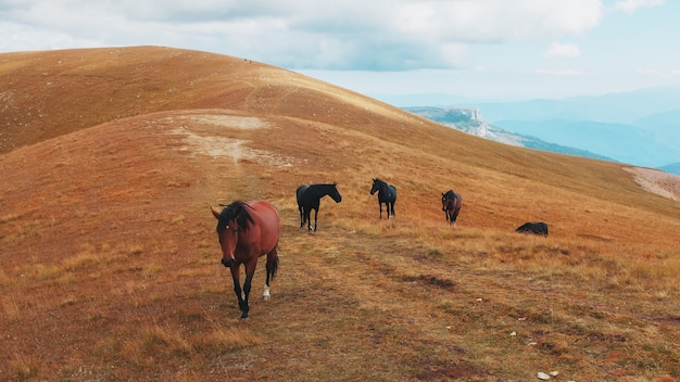 Маршрут через горные вершины и холмы через величественные пейзажи с лошадьми на расстоянии.