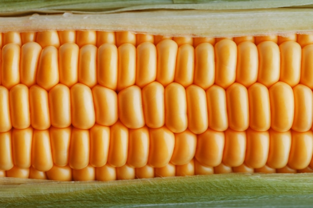 Спелые зерна золотой кукурузы крупным планом