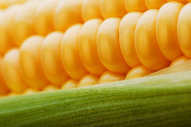 黄金のトウモロコシのクローズアップの熟した穀物