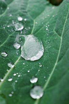 Зеленый лист с большой каплей росы. натуральный, натуральный