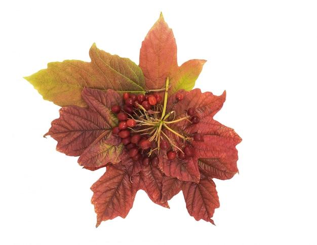 ガマズミ果実と葉の白い背景で隔離。秋の静物