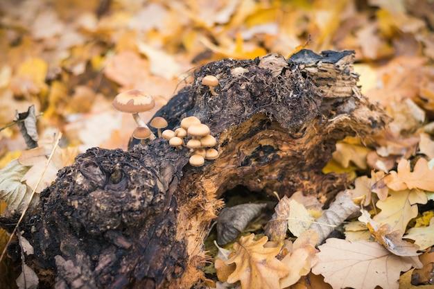 Грибы на гниющем куске дерева в осеннем лесу.