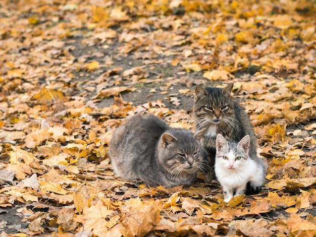 猫はお互いを助け合い、涼しい秋の天気で暖かく保ちます。