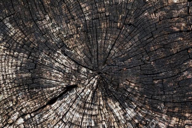 古いのこぎりの木の円形のテクスチャと背景。