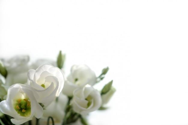白い背景にトルコギキョウの花の花束。