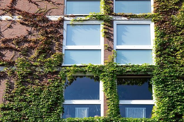 野生ブドウで覆われているれんが造りの家の景色。