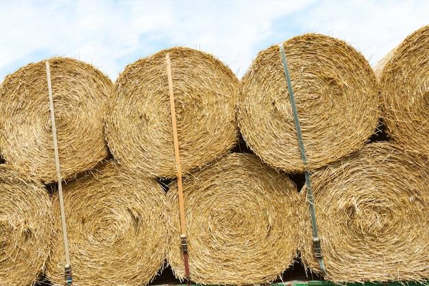農業産業における作物の収穫と輸送。