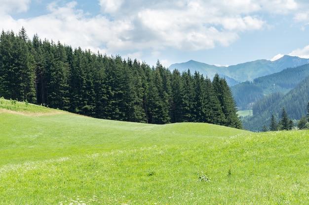 Взгляд крупного плана деланных маникюр высокогорных лугов против гор и лесов. понятие ландшафта, природы, сельского хозяйства.
