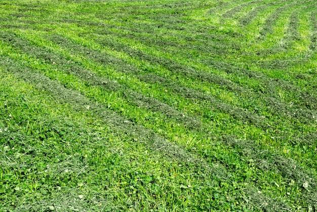 草が切られている刈られた芝生の眺め。