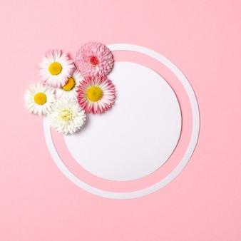 春の自然の最小限のコンセプト。デイジーの花とパステルピンクの背景に白い円形の紙カード。