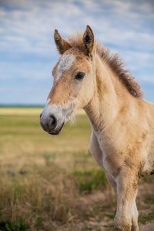 子馬は夢を見ている