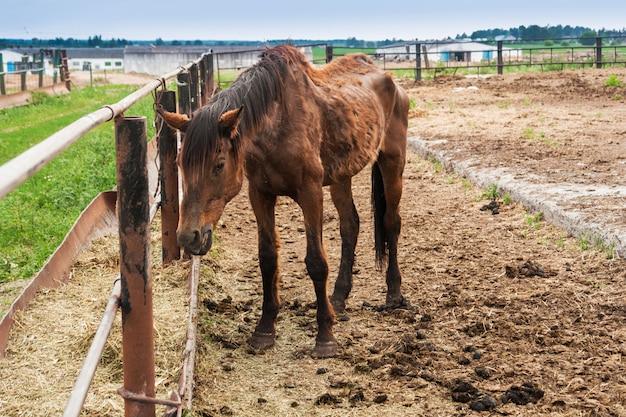 細い大きな馬