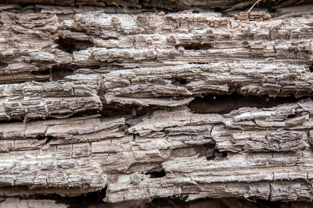 古い腐った木の丸太のテクスチャ