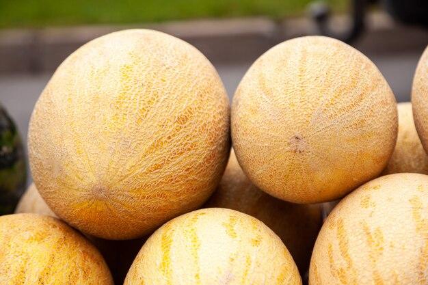 Свежая желтая дыня. много дынь на фермерском рынке