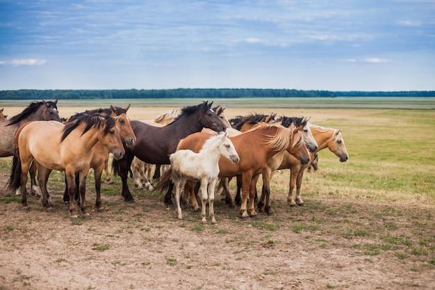 フィールドの馬の家族