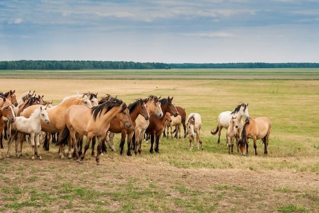 フィールド上の馬の群れ