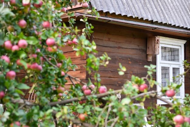 農家の庭でりんごの木の中で木造住宅