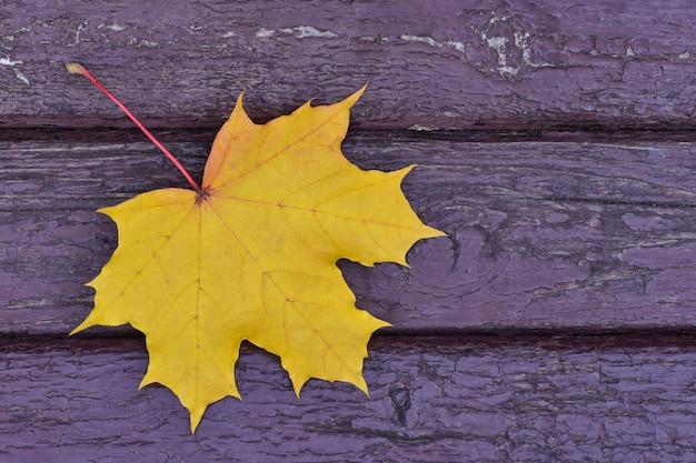 秋のシーズン、公園のベンチに落ちた黄色のカエデの葉クローズアップ