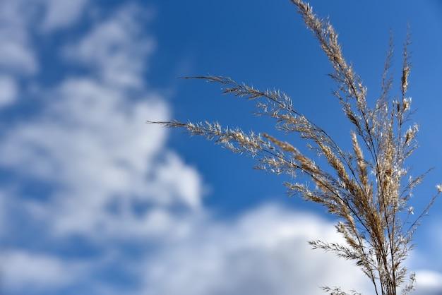背景に乾いた草の茎