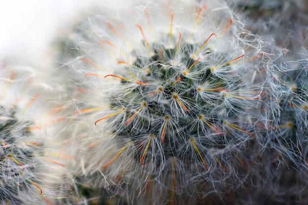 マクロ植物花サボテンのクローズアップ
