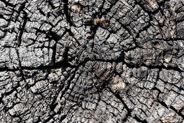乾燥木の幹のクローズアップのカットの質感
