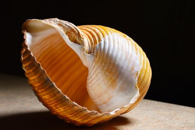 Морская раковина крупным планом