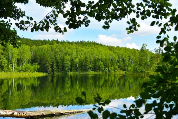 夏の森の青い湖を風景します。