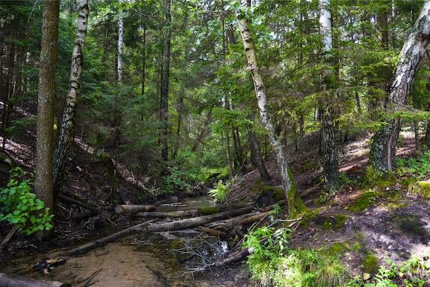 Бобры сделали плотину на реке в лесу