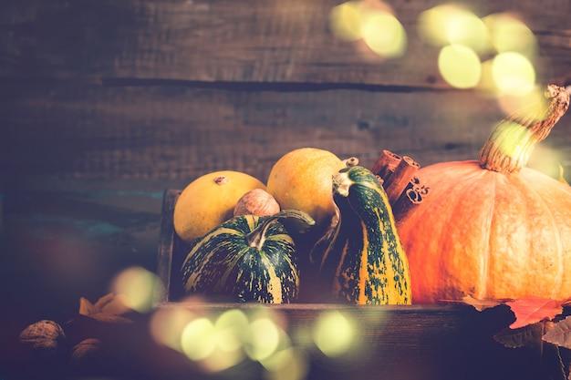 様々な装飾的なカボチャ。秋、感謝祭やハロウィーンのコンセプト