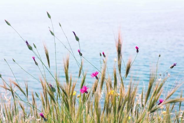 Красивые весенние цветы у моря. выборочный фокус.
