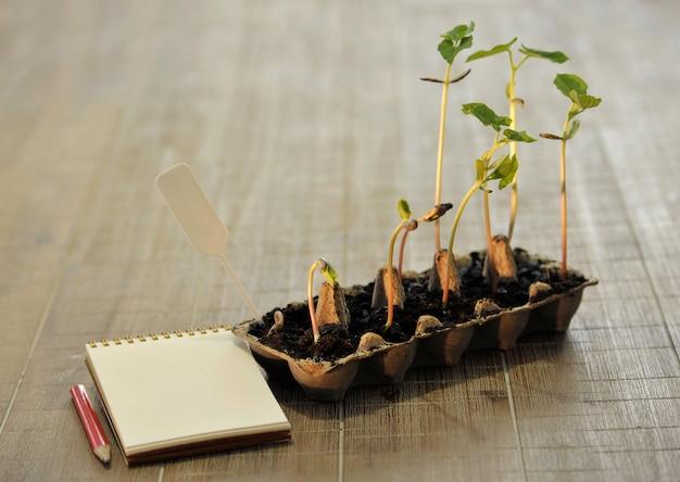 コピースペースを持つ木製の背景に生分解性の泥炭苔ポットで成長している鉢植えの苗。