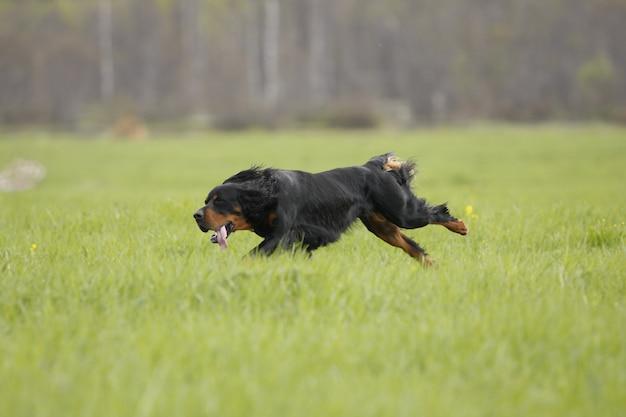 Собака бежит по зеленой траве