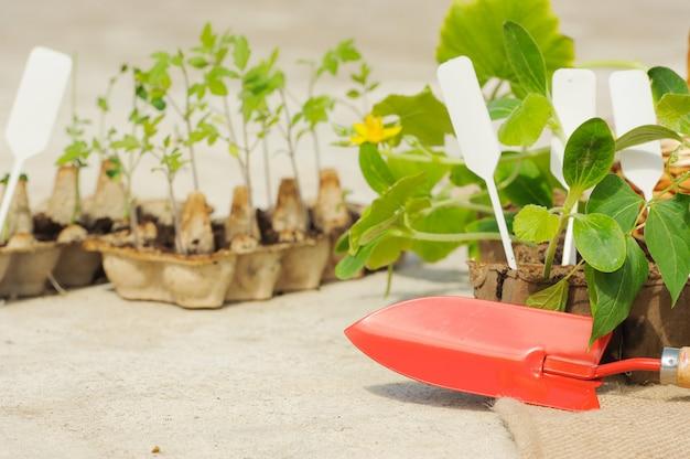 Выращивание рассады в горшках