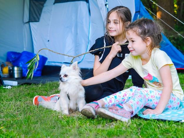 テントでキャンプ-テントの近くに一緒に座っている小さな犬チワワを持つ女の子。