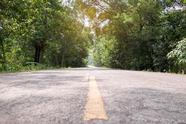 森の中の田舎道、両側の木のある道。